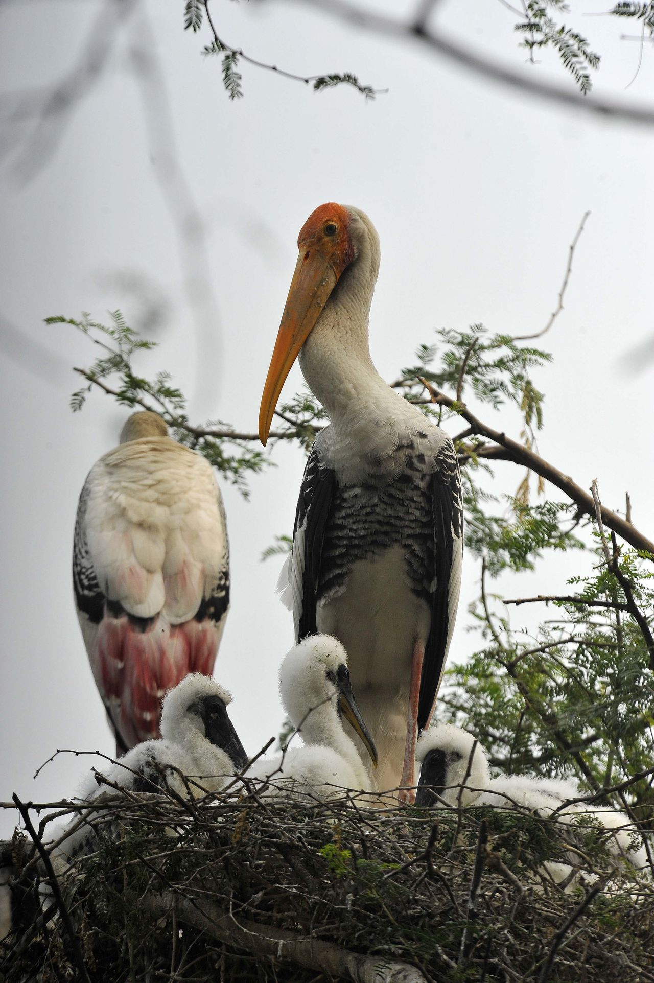 Stork nest with chicks in New Delhi, India. Avian Bill Bird Bird Nest Bird Photography Close-up Day Feathers Focus On Foreground Long Beak Long Neck  Nature Nest No People Outdoors Portrait Sky Stork Chicks Stork Nest Storks Wildlife & Nature