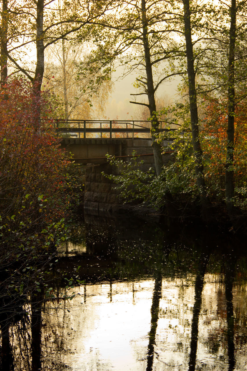 View Of Footbridge In Forest At Sunrise