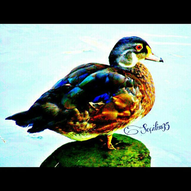 Bazen sadece beklemek.... :) Bird Taking Photos Seaside Nature Makes Me Smile Izmir Nature_collection Summer