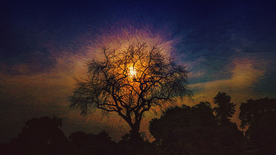 Art Nature Painting Source Sun Sunset Tree First Eyeem Photo