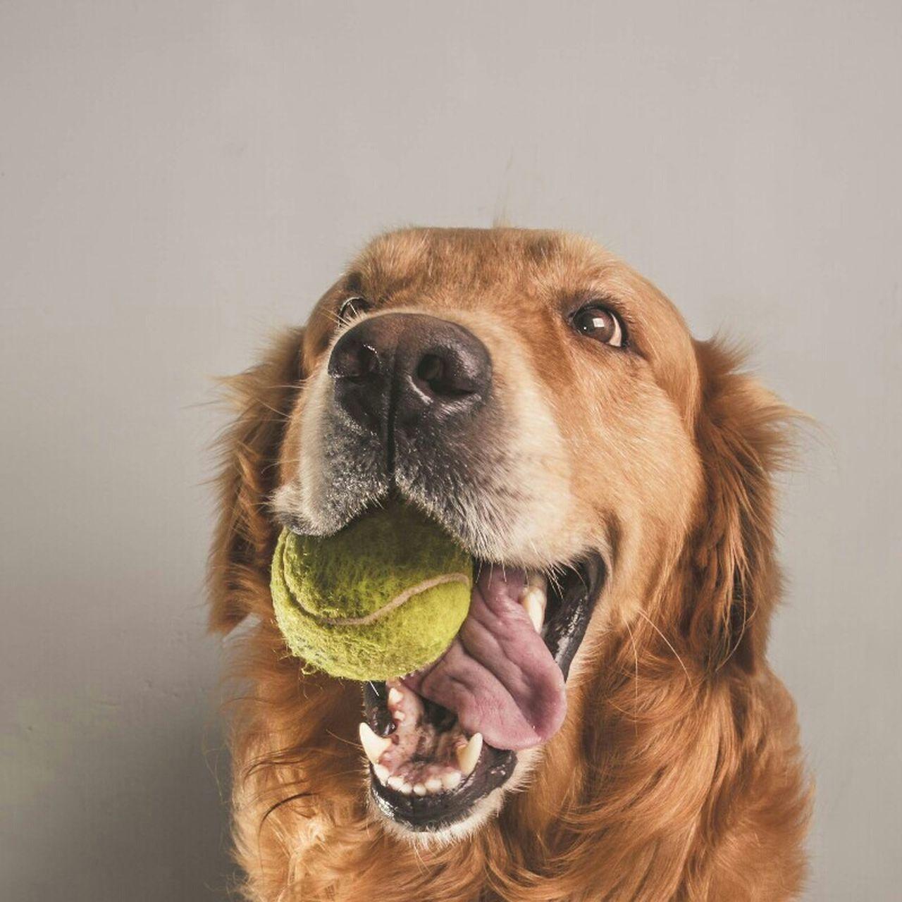 Beautiful stock photos of ostern, pets, domestic animals, dog, one animal