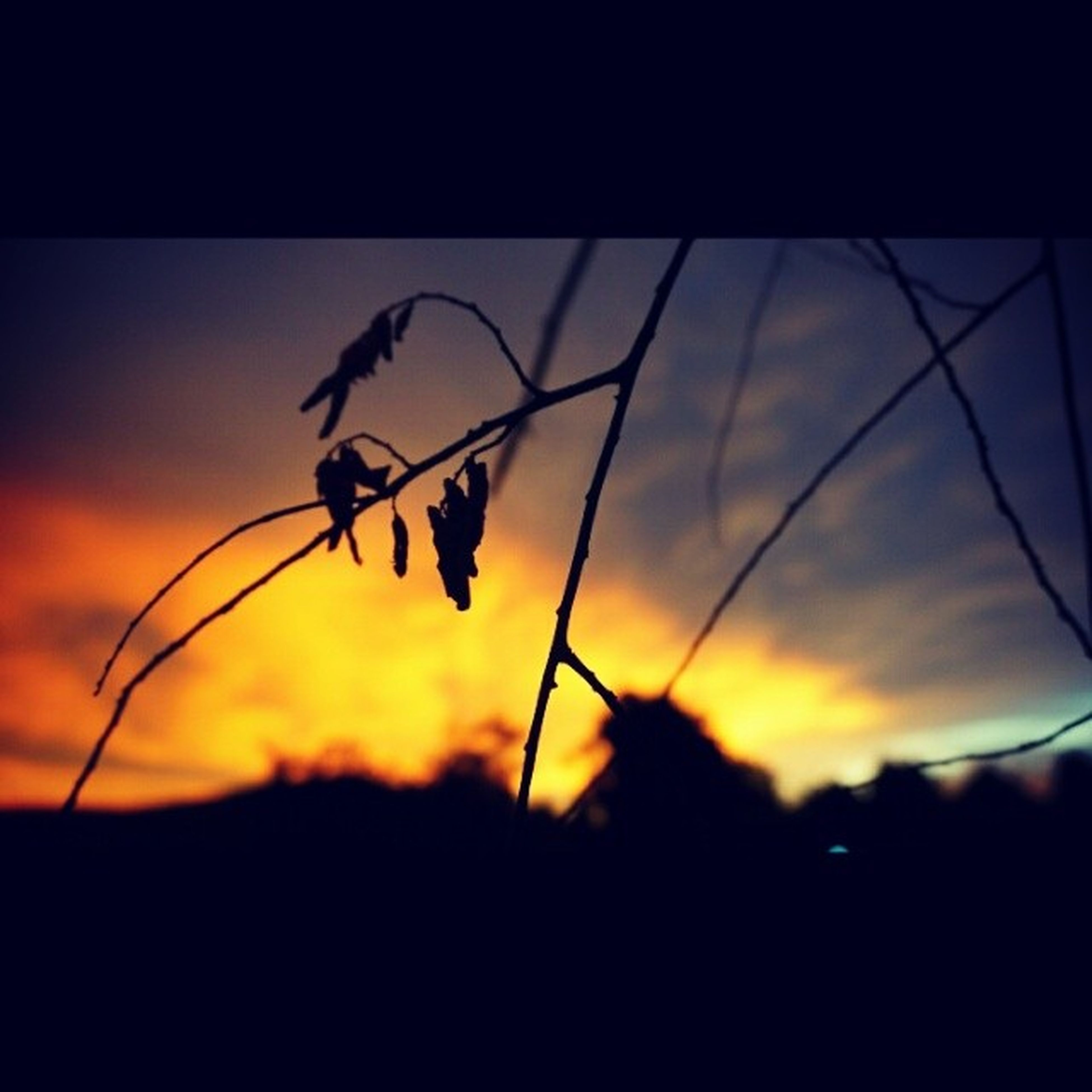 silhouette, sunset, insect, sky, focus on foreground, animal themes, nature, one animal, plant, selective focus, close-up, stem, wildlife, orange color, animals in the wild, beauty in nature, outdoors, low angle view, spider, no people