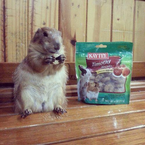 Treats Prairie Dogs Yummy!!
