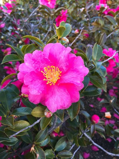 Japan Flower winter