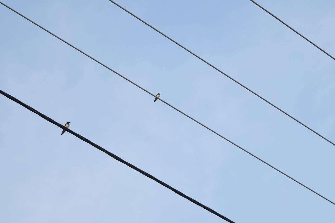 cable, low angle view, power line, power supply, day, no people, electricity, animals in the wild, outdoors, bird, animal themes, clear sky, perching, telephone line, sky