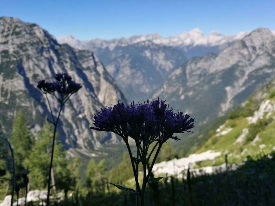 Triglav National Park Slovenian Alps