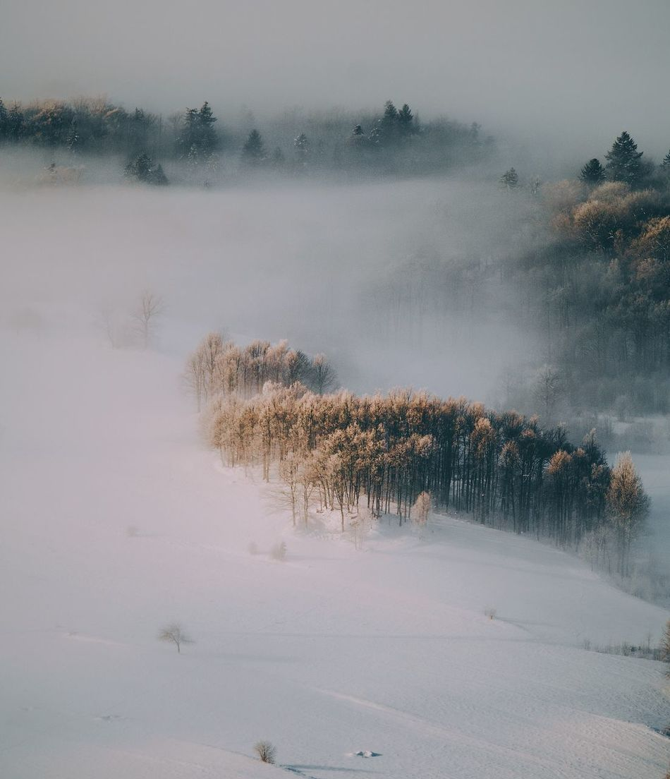 Nature Tranquil Scene Cold Temperature Tranquility Winter Tree Snow Weather Beauty In Nature Scenics Fog Landscape No People Non-urban Scene Outdoors Day Sky Hazy