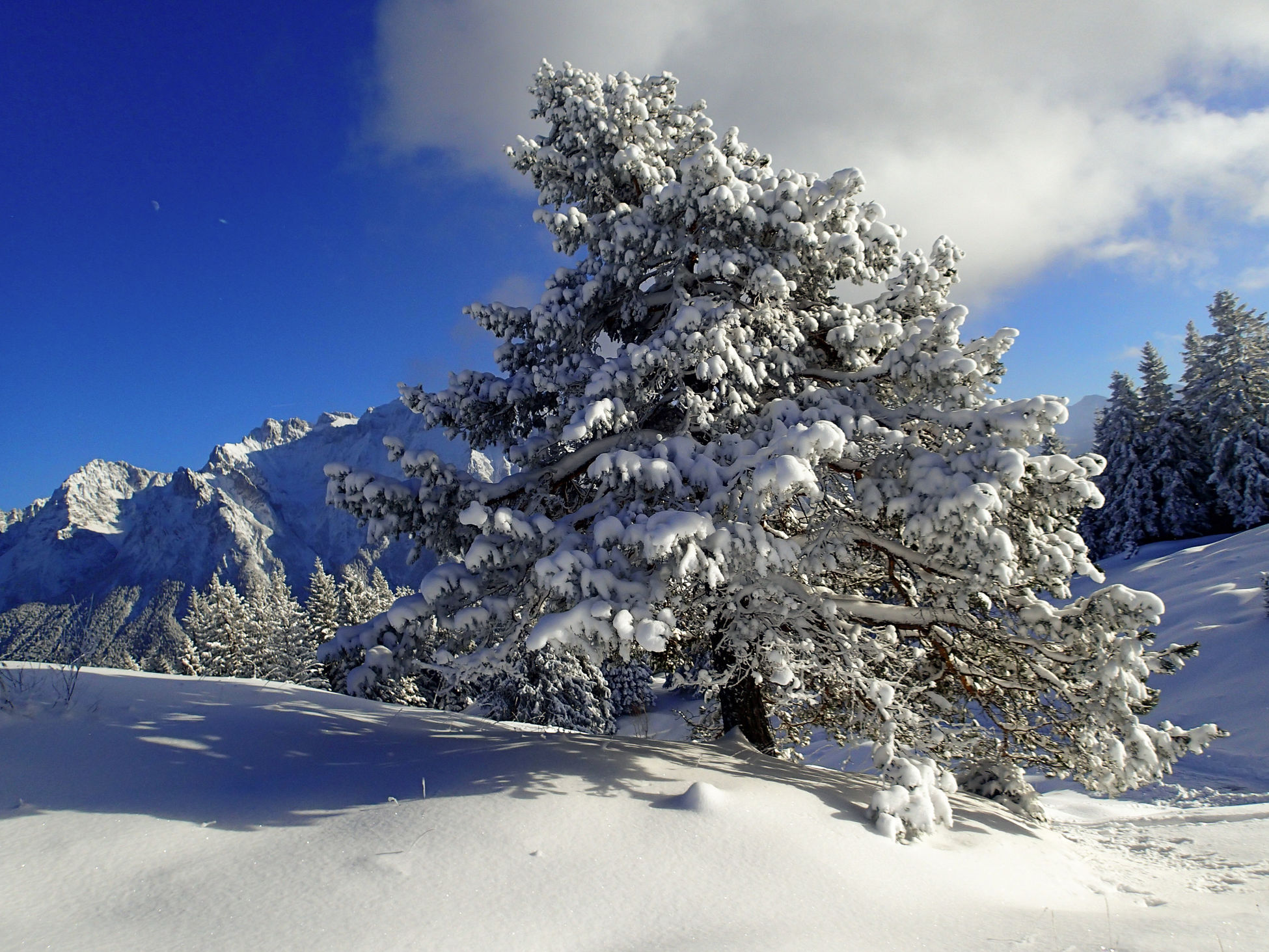 Tree Nature Snow Landscape Winter Cold Temperature Beauty In Nature Mountain Olympus TG-2 EyeEmNewHere Baum Mit Schnee Bäume Tree With Snow Hoher Kranzberg Outdoors Deutschland Bayern Bavaria Winter Wonderland Winter Trees