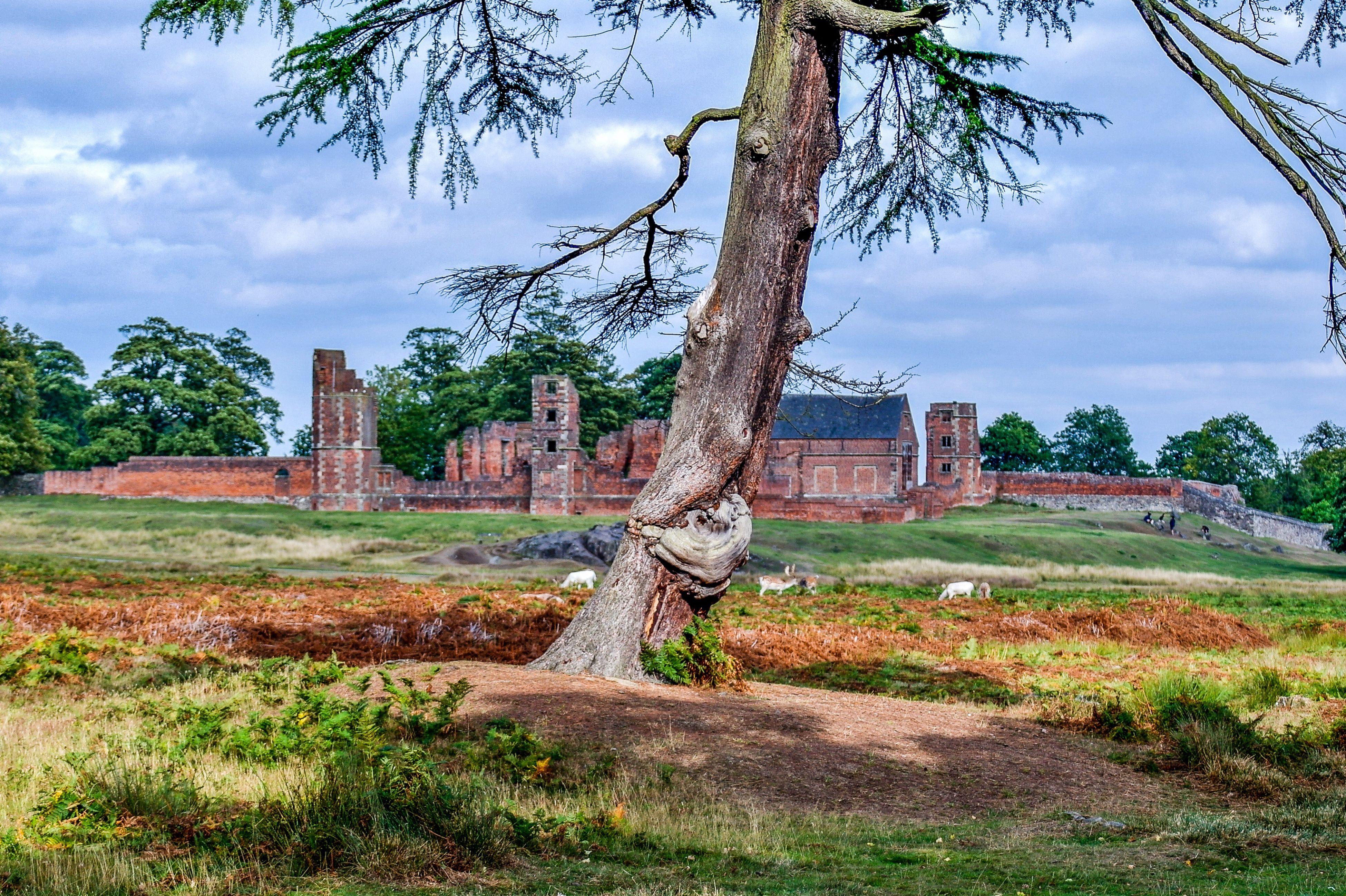 Bradgate Park Bradgatepark Bradgate House Bradgatehouse Leicestershire, Leicestershire Ruins Ruins Architecture Landscape Ruine
