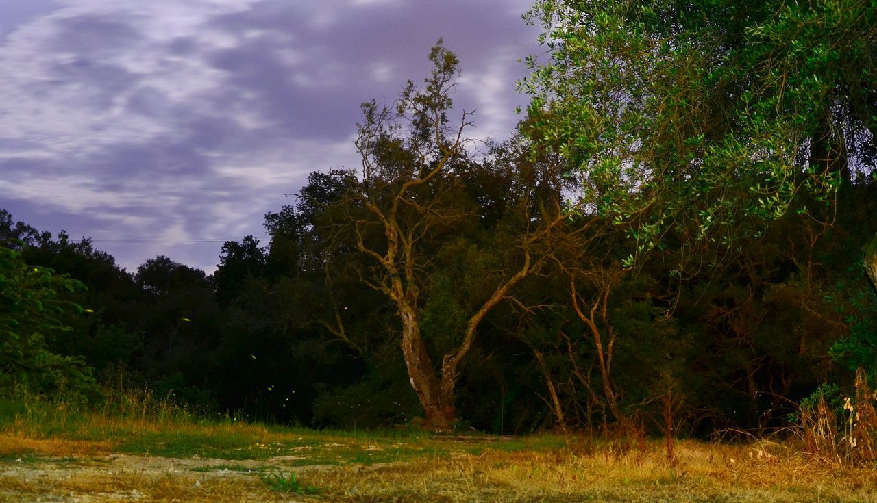 tree, nature, forest, growth, no people, beauty in nature, outdoors, tranquility, landscape, scenics, sky, grass, day