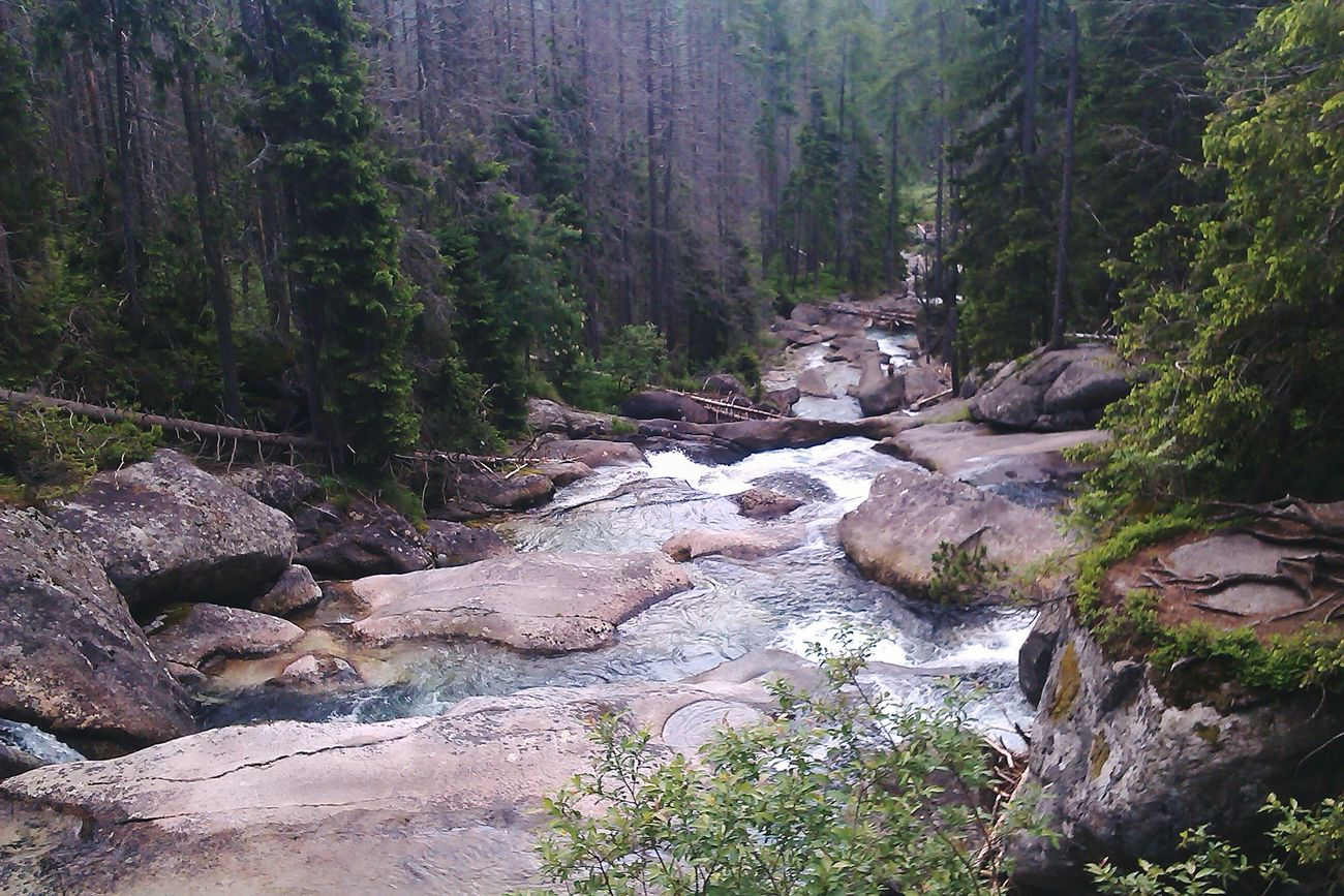 Stones Nature Green Mountains Slovakia Interesting Trees Forest Exciting Trip Wild Tatry Vysoke Tatry Gemse, Vysoke Tatry, Slovakia River