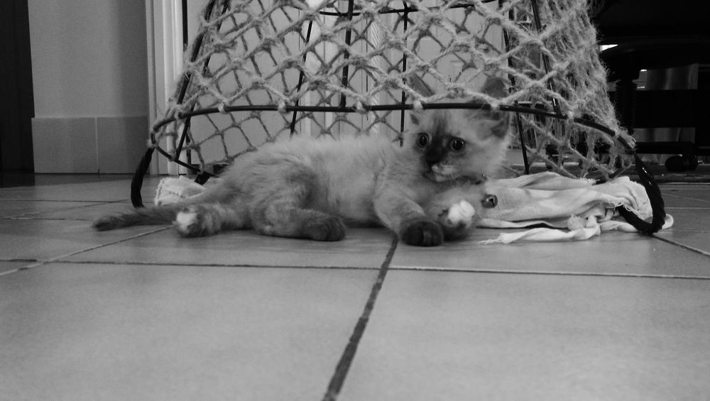 Kitten 🐱 One Animal Blackandwhite Black And White Friday
