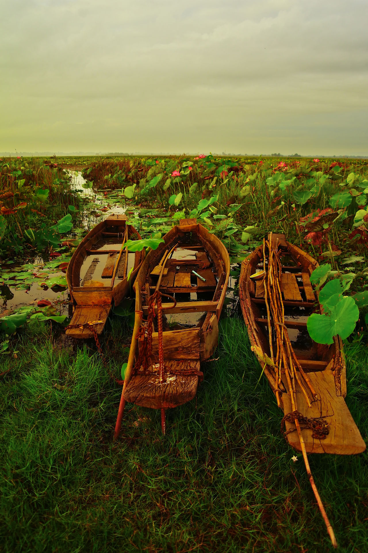 Abandoned Asian Culture Beauty In Nature Boat Boat Dock Day Field Grass Lake Landscape Livelyhood Lotus Flower Lotus Leaf Love Nature No People Obsolete Outdoors Scenics Sky Tranquil Scene Tranquility Tropical
