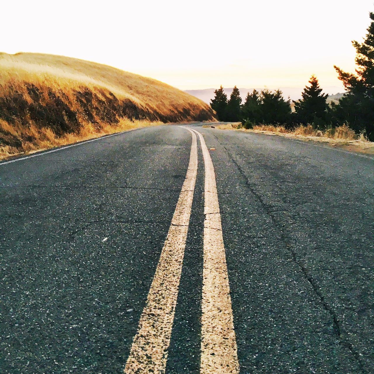 Before getting into the car, I took one last shot of the road. The Way Forward Transportation Road Tree Road Marking Clear Sky Landscape Tranquil Scene Surface Level Diminishing Perspective Outdoors Solitude Countryside Nature Tranquility Vanishing Point Non-urban Scene Day Long Remote