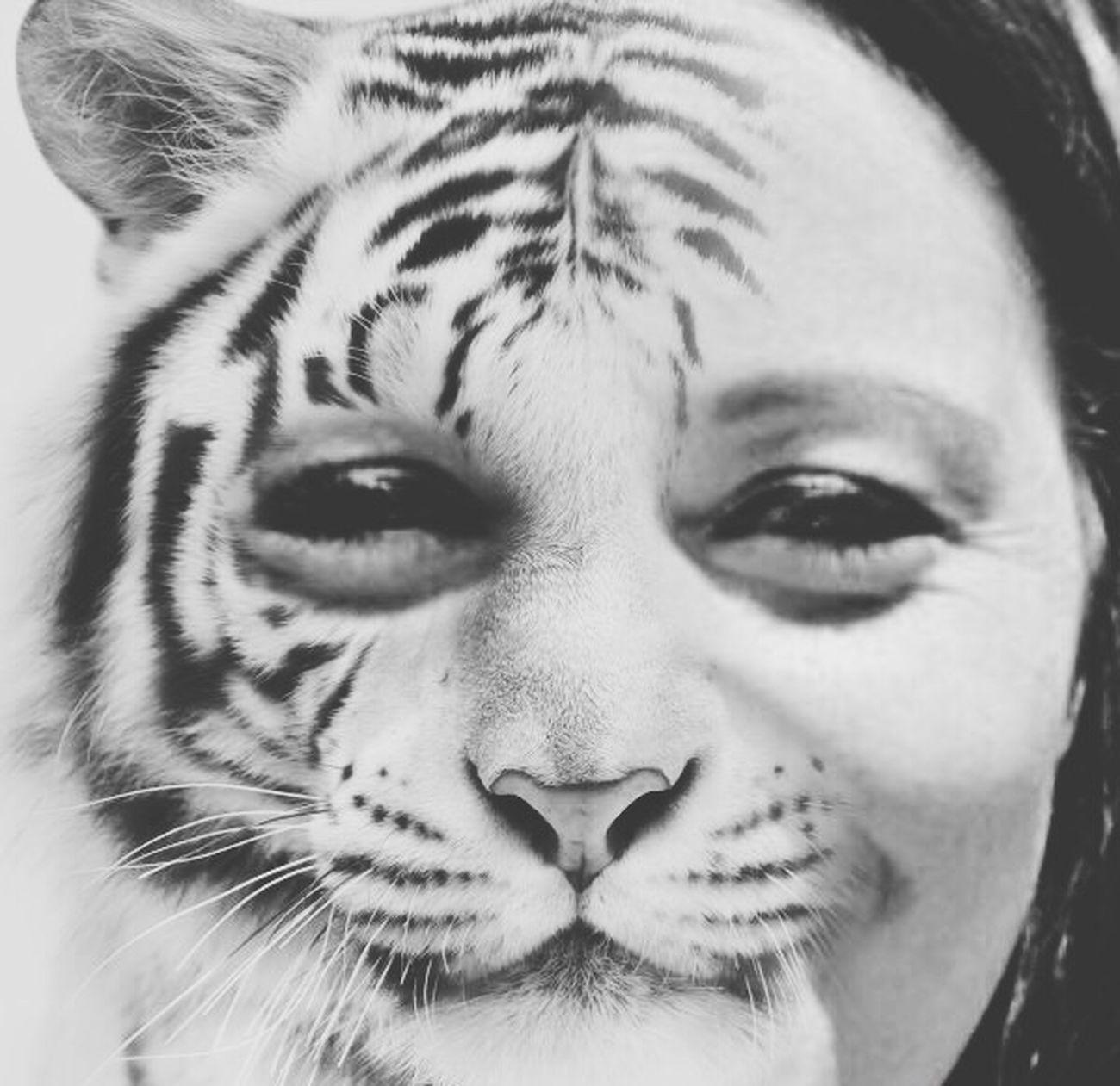 Faces Faces Of EyeEm Face Tiger Tiger-love Tiger Face Eeyem Black And White Black&white Blackandwhitephotography Eyeemphotography Eeyemgallery Editorial  Editing Edited Edit EyeEmBestPics Eeyem Photography (null)Black And White Photography Black And White Collection  EyeEm Best Shots EeYem Best Shots