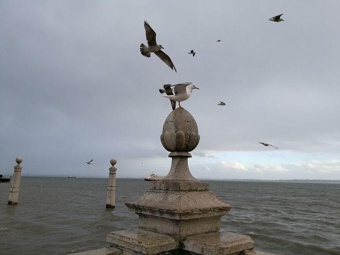 Bird Animals In The Wild Animal Themes Flying Sea Lisboa🇵🇹 Praça Comerçio