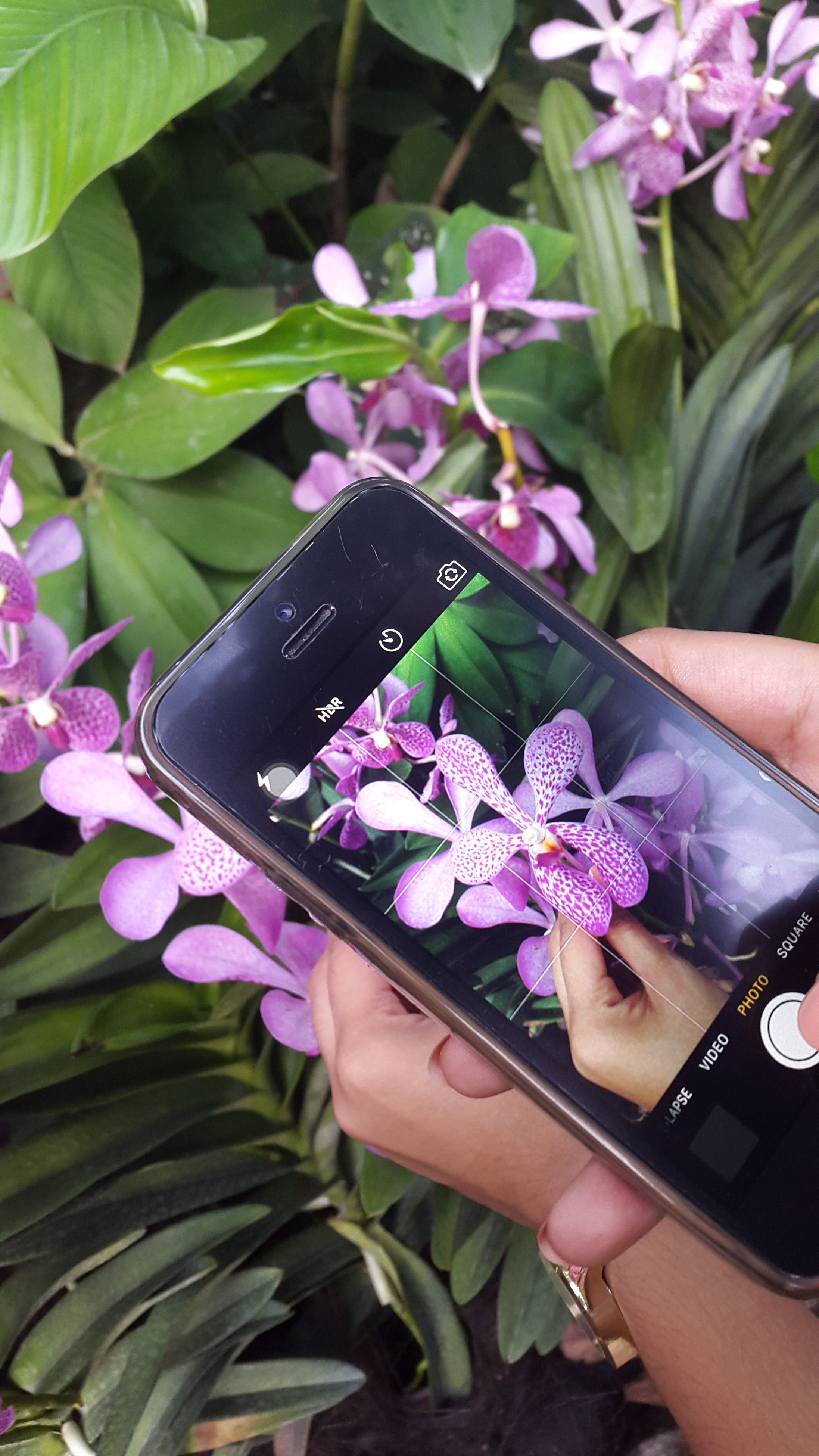human hand, flower, communication, real people, human body part, plant, day, mobile phone, purple, technology, wireless technology, holding, leaf, freshness, one person, outdoors, close-up, fragility, nature, beauty in nature, women, flower head, people
