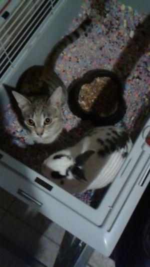 Kitty Bunny 🐰 Tsubasa Alousious Jordans Pets