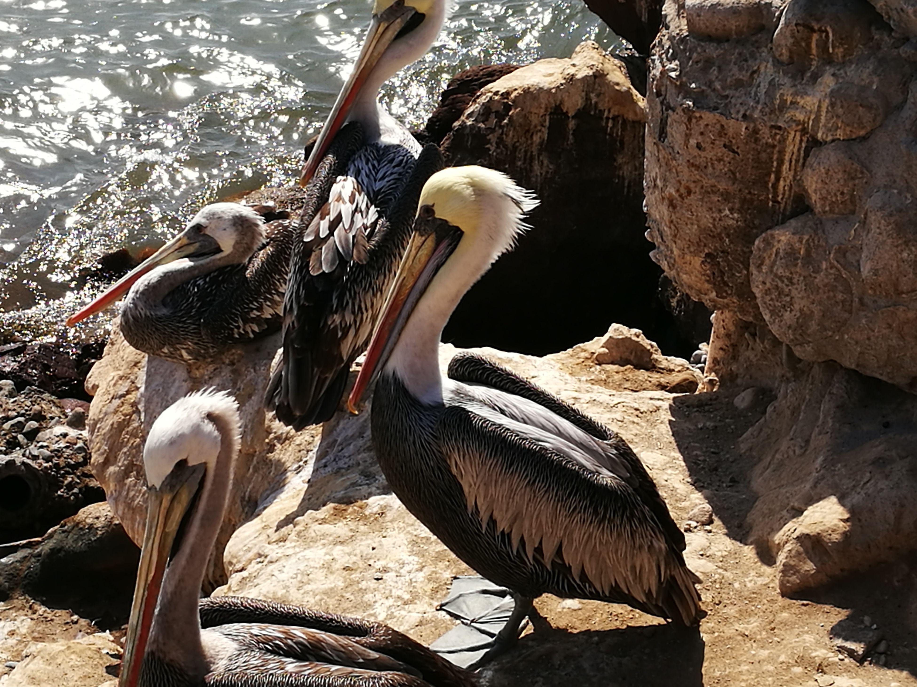 animal themes, bird, animals in the wild, wildlife, zoology, one animal, pelican, tree trunk, beak, animal, nature, water bird, day, outdoors, animal behavior, riverbank