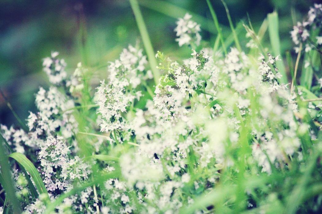 flowers Hello World