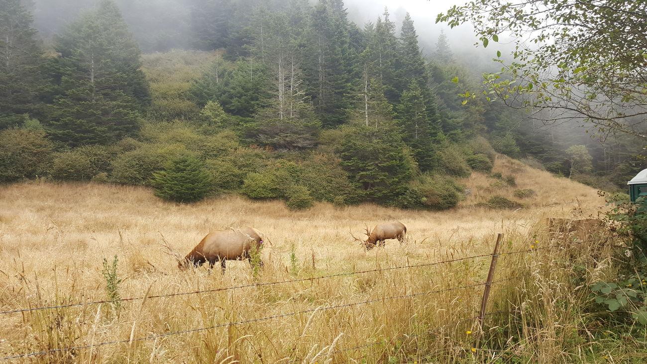 Pure nature! Animals Deer Dry Fog Grass Green Haze Mountain Nature Pacific Coast Highway Tree