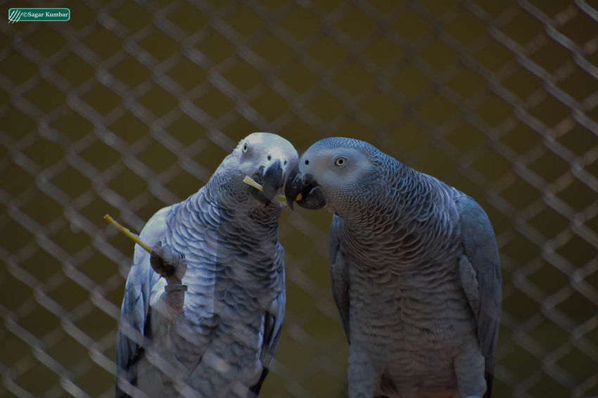 Animal Themes Day Outdoors Bird Animal Themes Day Outdoors Bird Animals In The Wild No People Togetherness