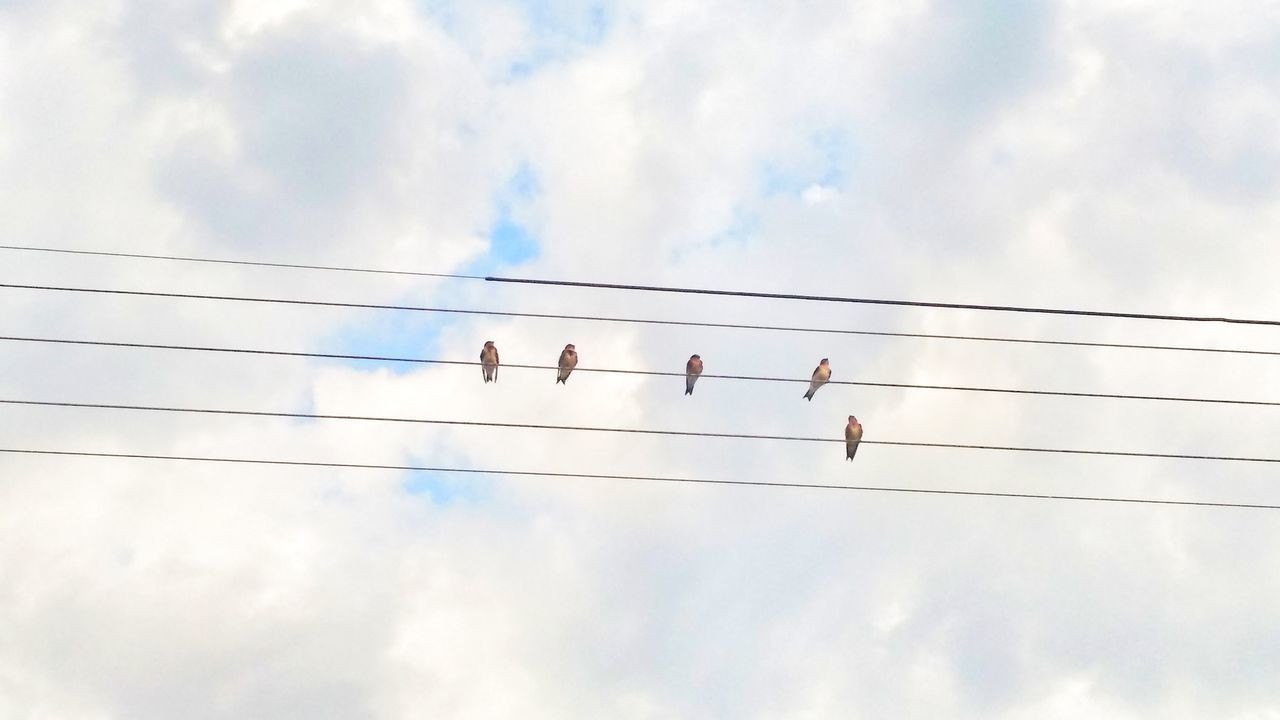 Cloud - Sky Cable Bird Sky Flock Of Birds Connection In A Row Large Group Of Animals Day Togetherness Power Line  Animal Wildlife Animals In The Wild Silhouette Flying Outdoors Power Supply Animal Themes Electricity  Low Angle View
