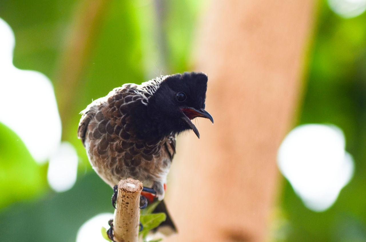 Bird Nature Beauty In Nature Bulbul Bird Barkingbeauty