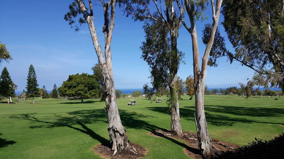 Waikoloa Golfin' Golfcourse Hawaiilife Enjoying Life Beach Life Outdoor Photography