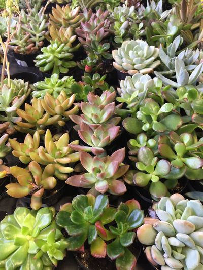Garden Photography Shopping For Plants Indoor Plants Garden Nursery Nursery Houseplant Home Center Houseplants Succulents Succulent Succulent Plant Succulent Plants