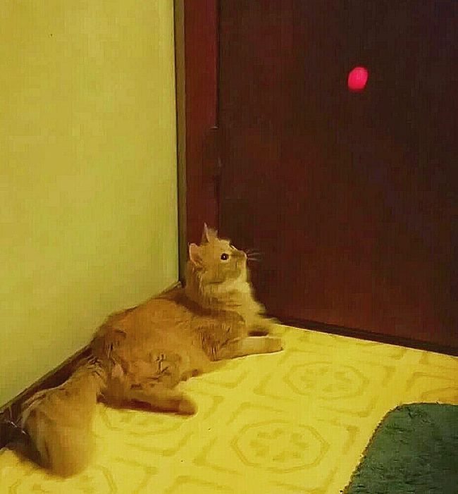 Photography In Motion Cats Of EyeEm Watching Ball Bouncing Ball Ball Animal Photography Cats Playing Hot Pink Ball Ball In Air Cat Fur Family