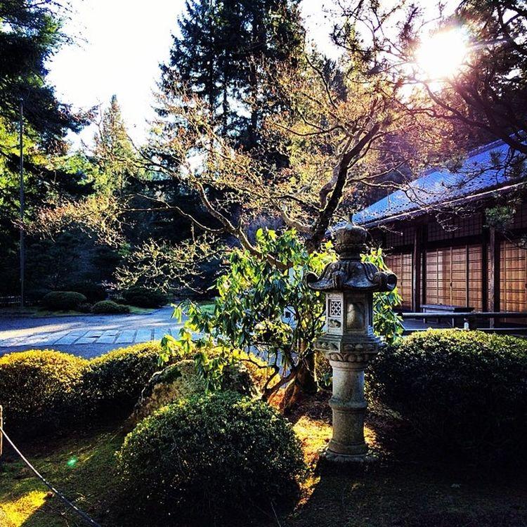 Latergram Portland Japanesegarden Washingtonpark oregon naturesbest instagood featuremeinstagood