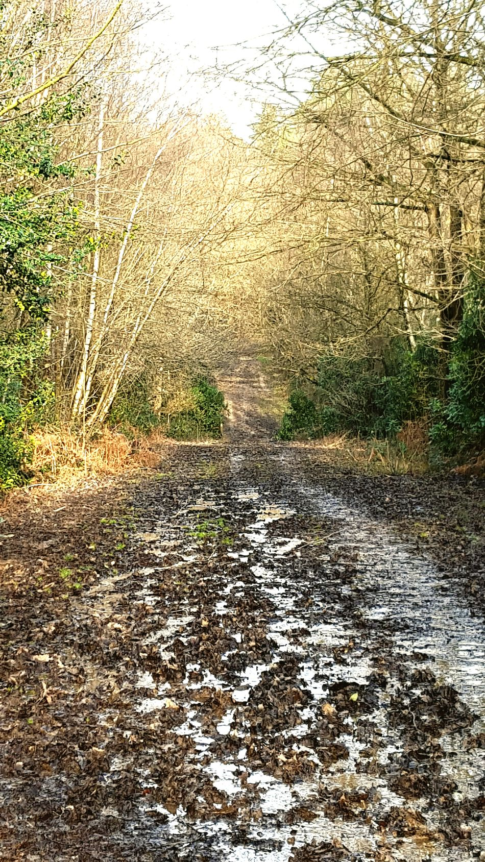 Hemel Forestwalk Forest Muddy Dogwalk Forest Path Mudtrack Which Way? Natural Beauty Nature Photography