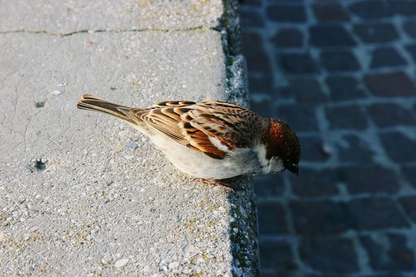 One Animal Day Animal Themes Outdoors No People Close-up Bird Wall Looking Down From Above Animals In The Wild Animal Wildlife Nature Sparrow