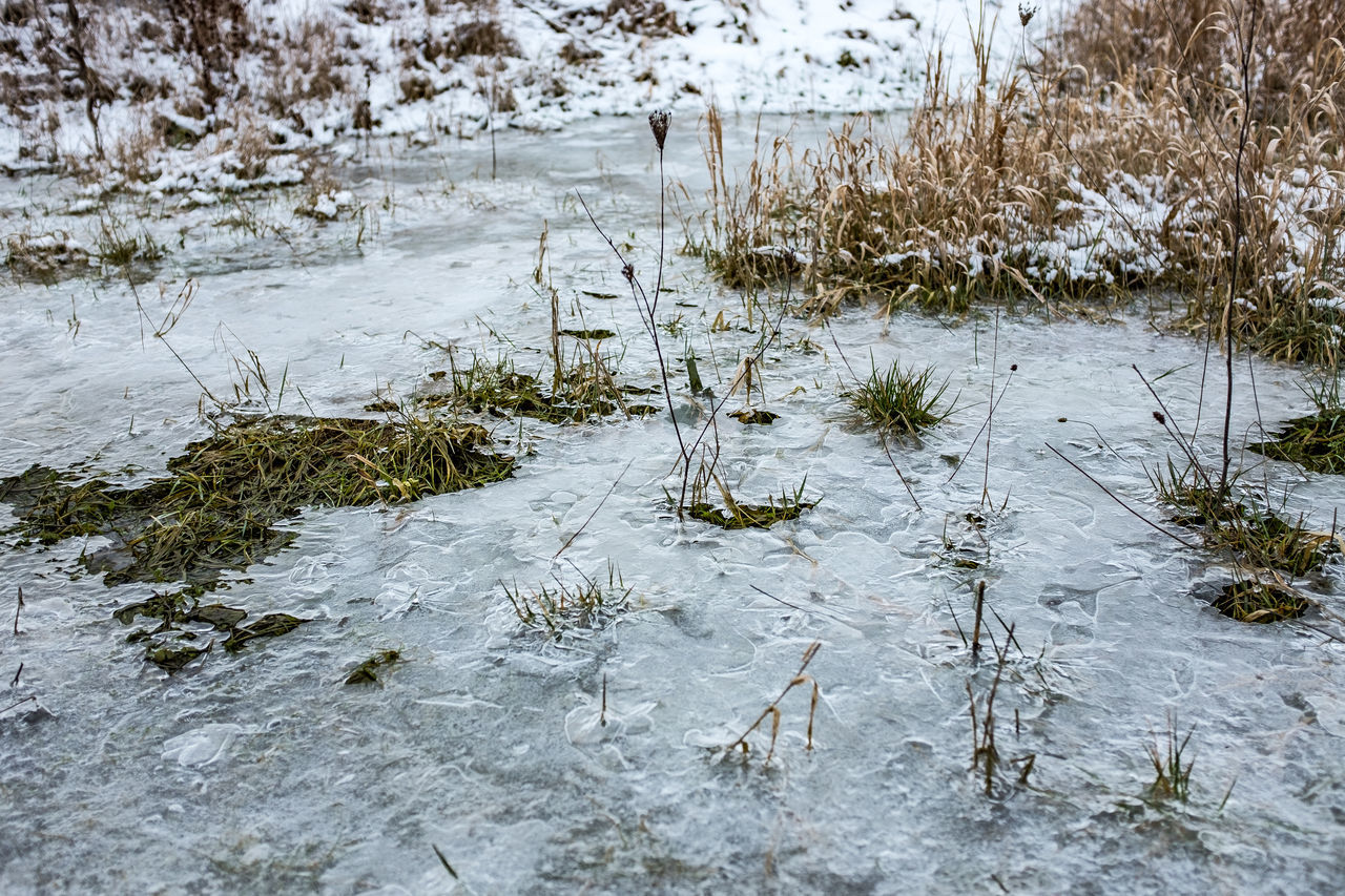 water, winter, cold temperature, snow, nature, lake, ice, weather, frozen, no people, frost, outdoors, marsh, floating on water, day, beauty in nature, tree