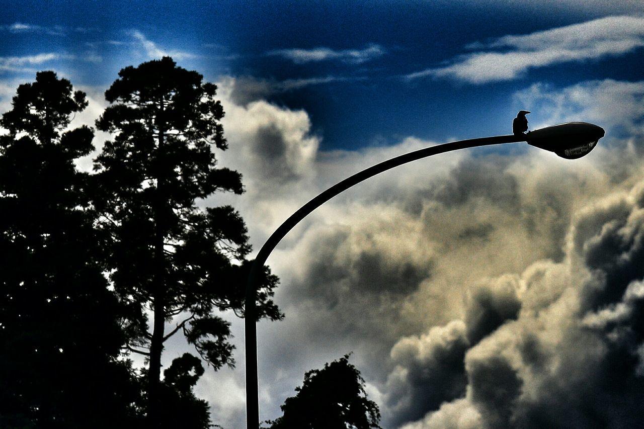 ツーリングの時に撮ったんだけど……車とは全く関係ないねσ(^◇^;) ダーク部 シルエット部 Silhouette Silhouettes Silhouette_collection Eyeem Best Shots - Silhouette Crow Sky And Clouds Tree Silhouette Clouds And Sky