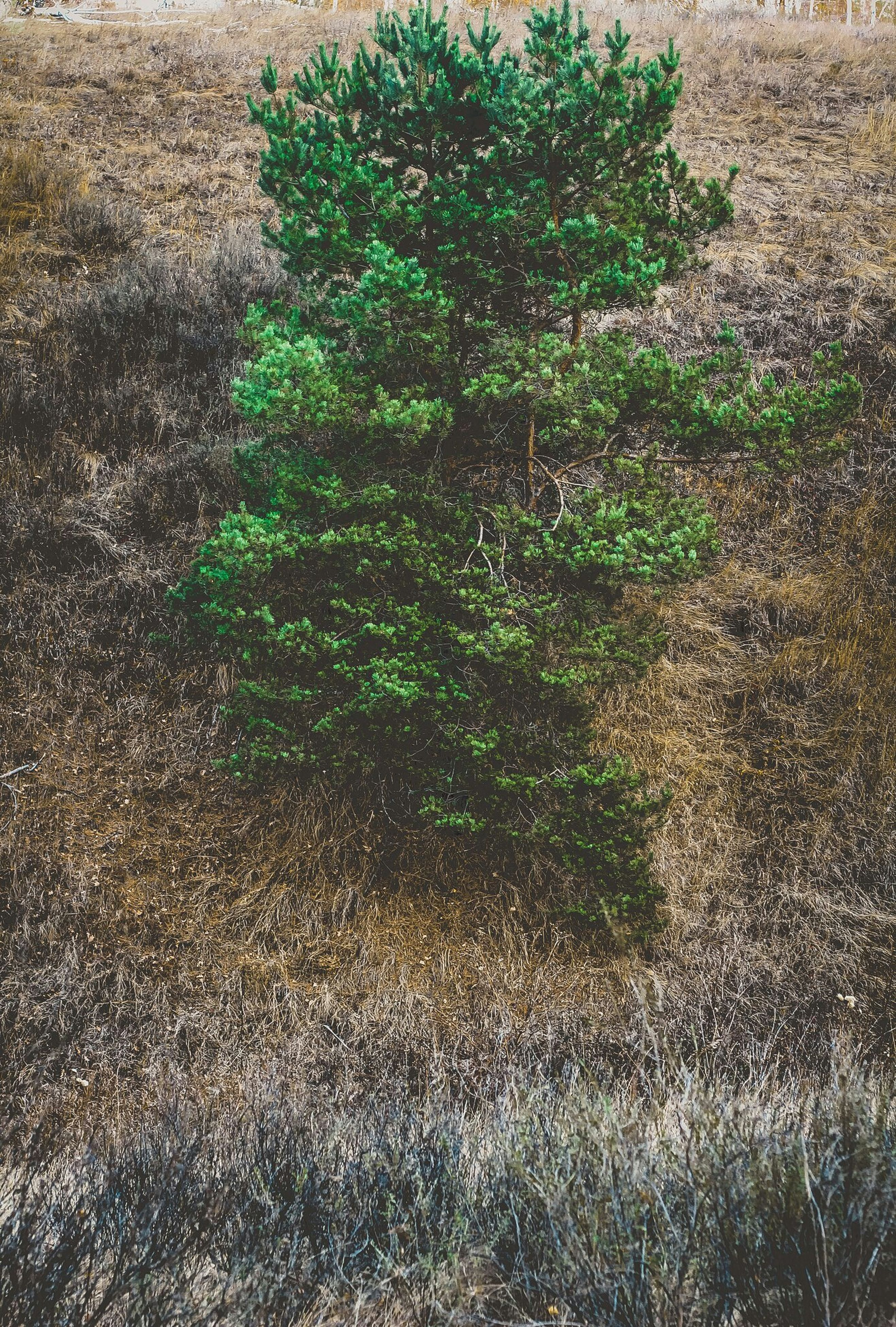 growth, green color, high angle view, plant, grass, nature, field, sunlight, tranquility, day, outdoors, growing, no people, beauty in nature, tree, shadow, leaf, park - man made space, grassy, footpath