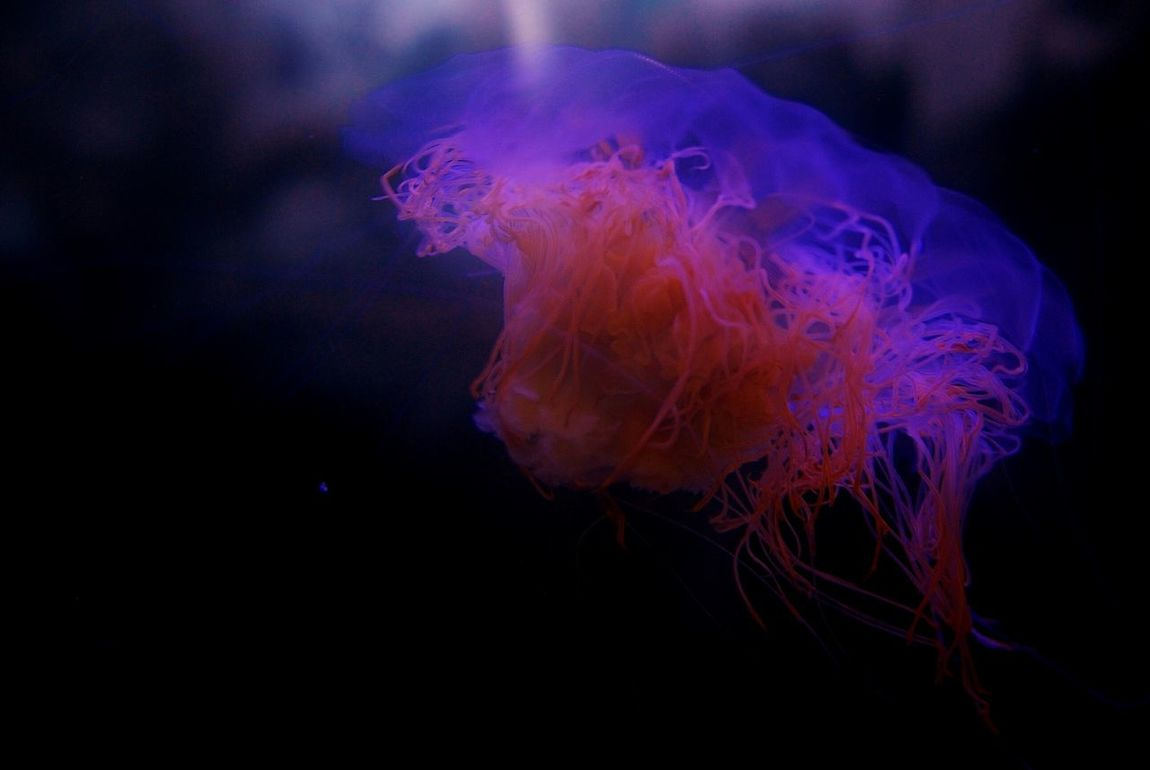 Beauty & Grace 01 Jellyfish Sea_collection Life In Colors Seaflowing