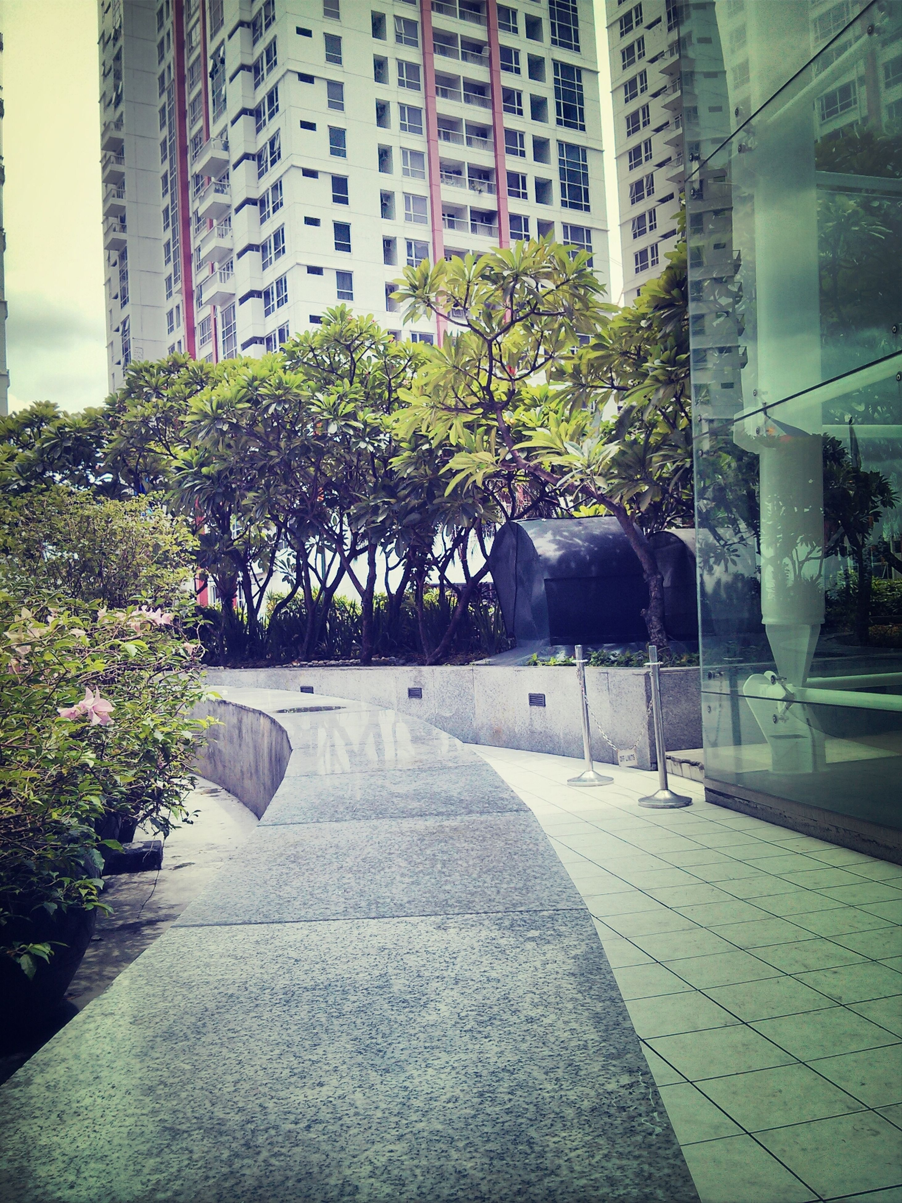 building exterior, architecture, built structure, tree, city, growth, building, the way forward, day, plant, sunlight, shadow, outdoors, street, footpath, walkway, incidental people, empty, no people, office building