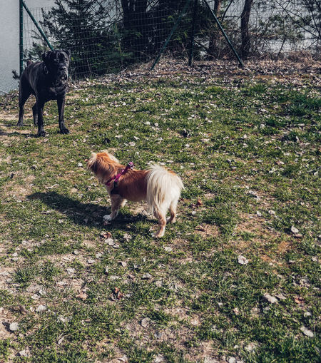 Dogs Film Friends Meeting Meeting Friends Nature Animal Themes Big And Small Day Dog Domestic Animals Field Firendship Full Length Grass Growth Looks Like Film Mammal Nature No People One Animal Outdoors Park Pet Pets Small And Big Tree
