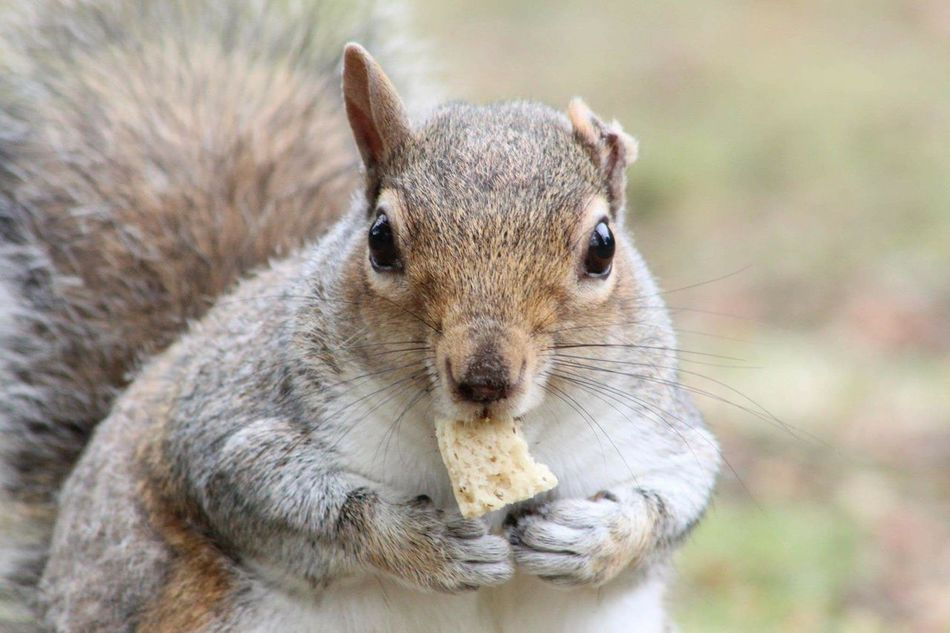 Beautiful stock photos of squirrel, Animal Behavior, Animal Themes, Animals In The Wild, Close-Up