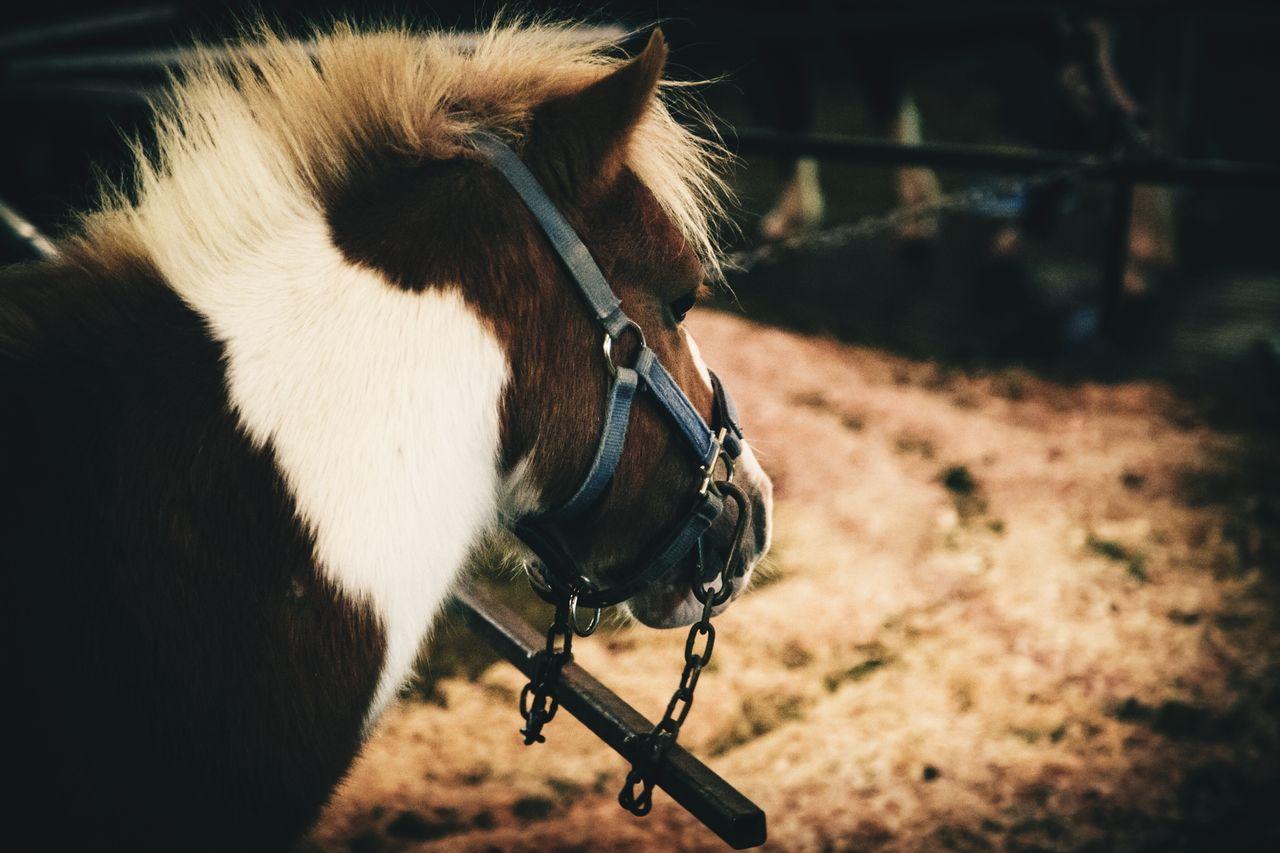 Pony named Lucky Animal Farm ...enjoy The Show... Politics