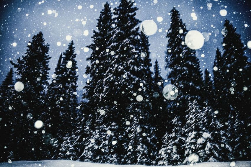 Sky Low Angle View Silhouette Nature No People Tree Night Water Outdoors Beauty In Nature Cold Temperature Astronomy Snowing Galaxy Nature Beauty In Nature Tree Snow Tranquil Scene Tranquility Winter Landscape Silhouette Rural Scene