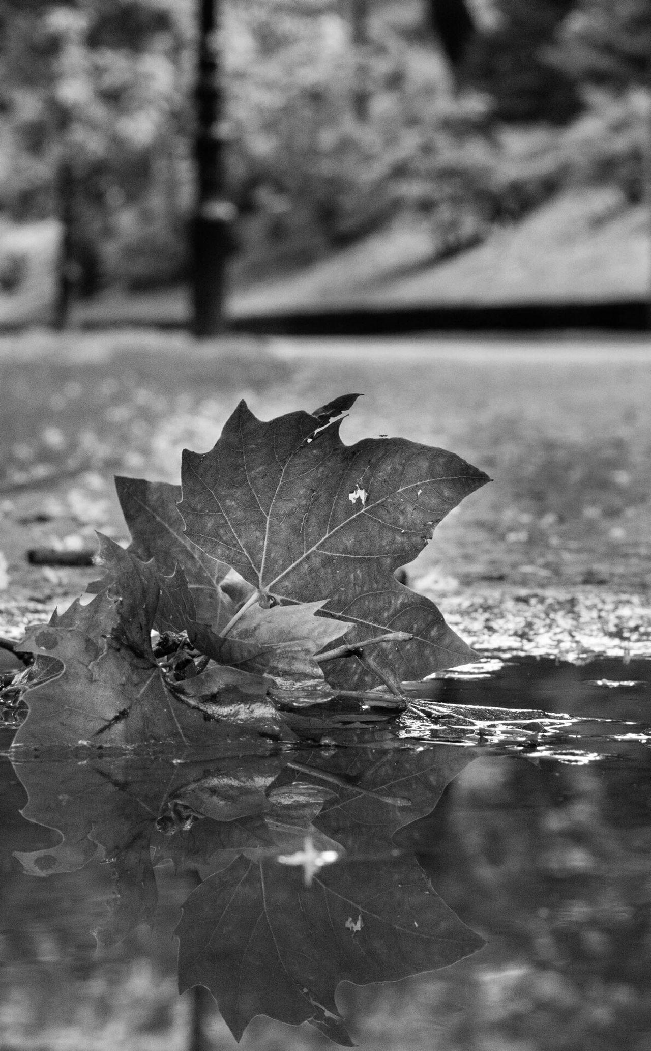 """""""El mundo es un reflejo de nosotros mismos"""". Andrew Matthews Naturaleza Parque  Park Hoja Donostia / San Sebastián Donostia Cristinaenea Nature"""