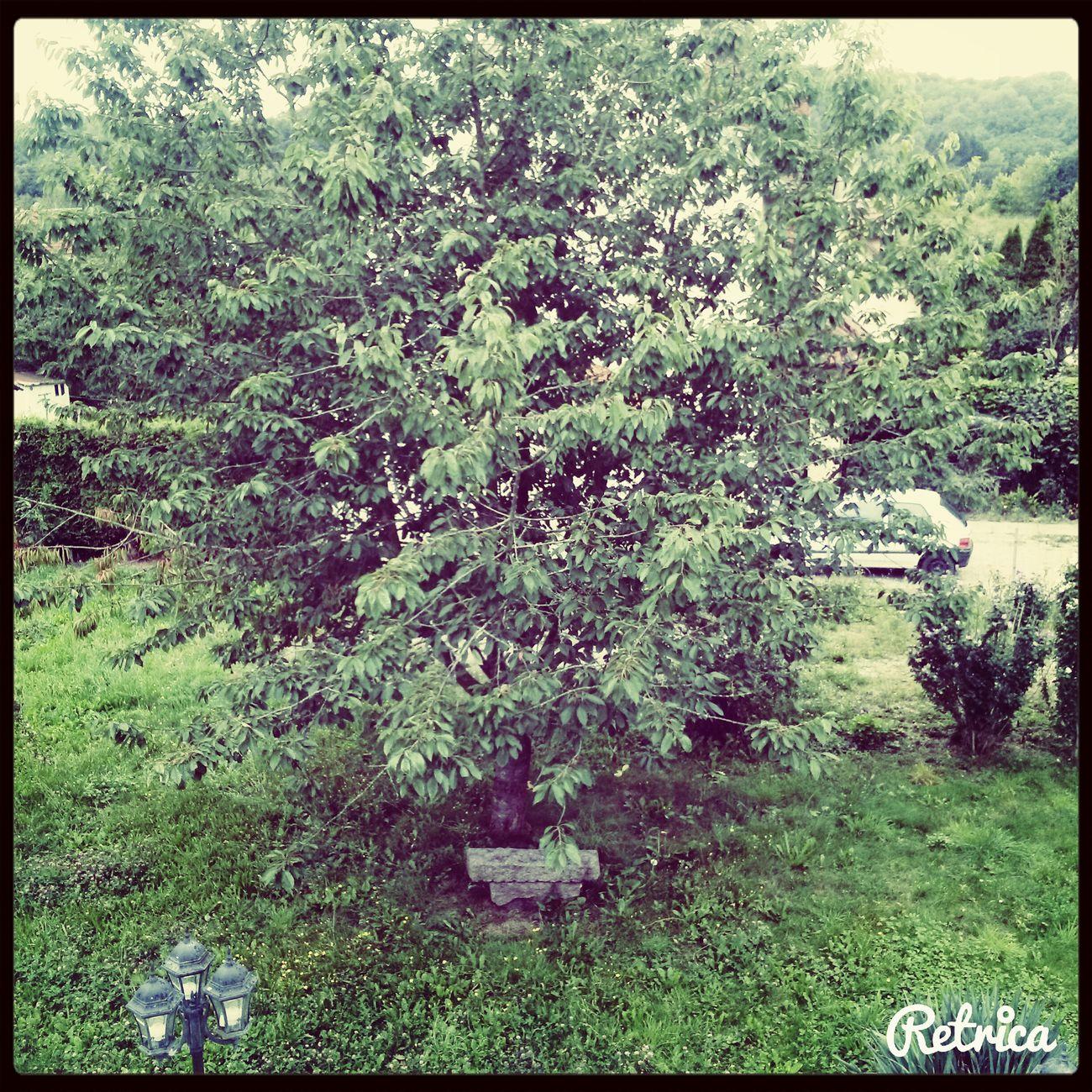 Ceci est un arbre, mon arbre. First Eyeem Photo