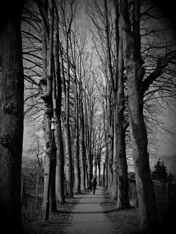 blackandwhite black and white eye4black&white  For the Love of Trees ~ by Steffi