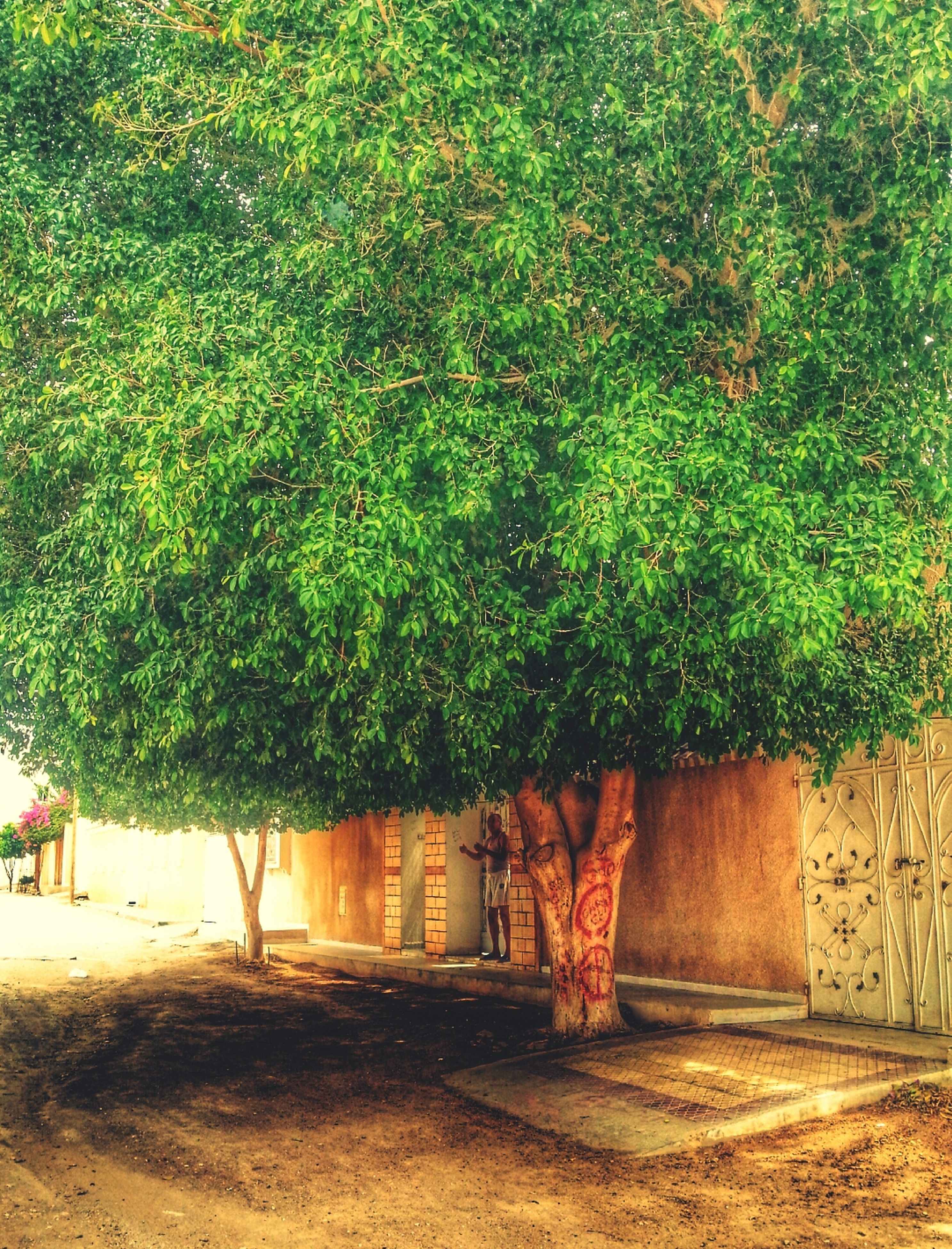 built structure, tree, architecture, growth, green color, building exterior, house, plant, grass, sunlight, nature, day, outdoors, no people, field, wall - building feature, door, wood - material, shadow, residential structure