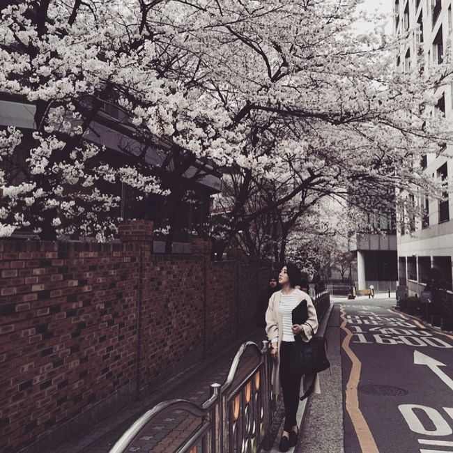 🌸🌸🌸🌸🌸 Spring Streetphotography That's Me Cherry Blossoms