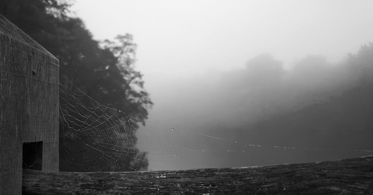 some not sense so spiders said.... Nature_collection Beauty In Nature The Great Outdoors - 2016 EyeEm Awards EyeEm Best Shots - Black + White Black And White Eye4photography  Blackandwhite Photography Minimalist Fine Art Photography Outdoors No People Art Gallery Landscape_Collection Lake View Lakeside Spidersweb Spiders Animal Themes Tranquility Black&white Nature The Week On Eyem Autumn 2016 Autumn Non-urban Scene