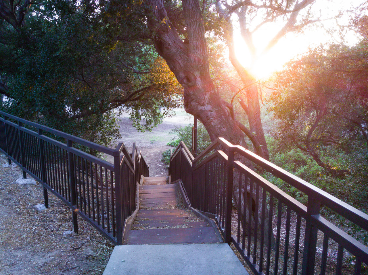 Railing Tree The Way Forward Footbridge Outdoors Bridge - Man Made Structure Day Nature Sunlight Beauty In Nature No People Sky